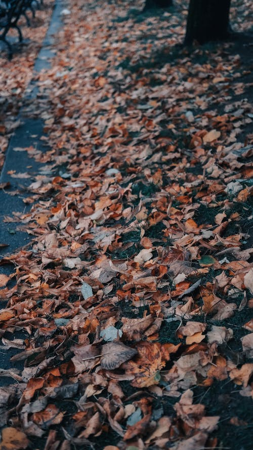 Brown Dried Leaves on the Ground