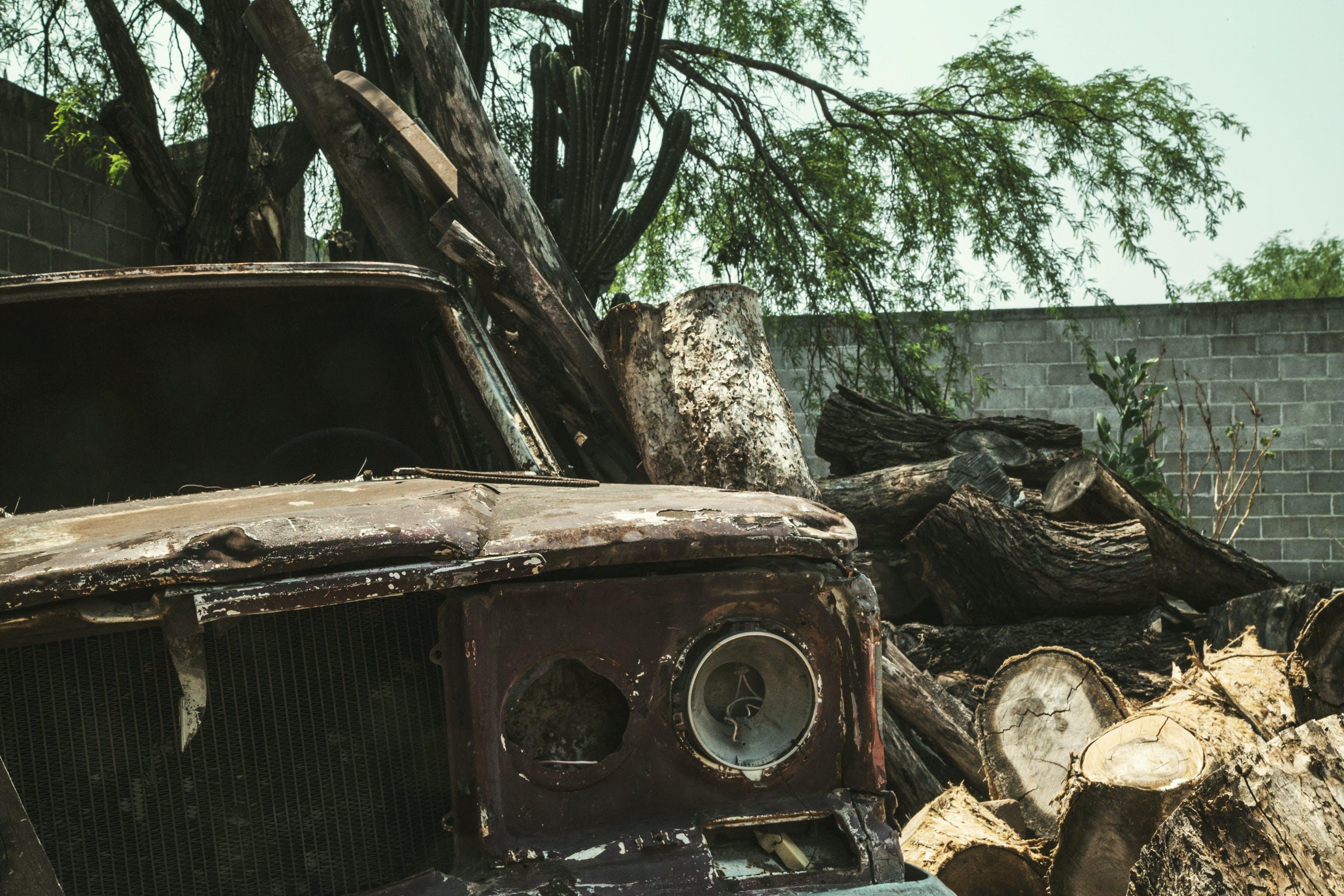 Brown Vehicle Beside Tree Trunks
