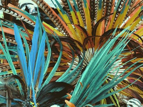 깃털, 네이티브 댄스, 멕시코, 원주민의 무료 스톡 사진
