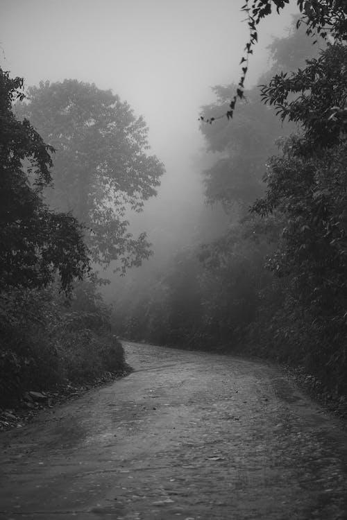 Безкоштовне стокове фото на тему «вода, Деревина, дерево»