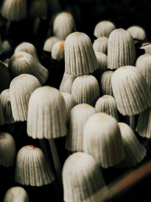 Gratis lagerfoto af natur, skov, svamp