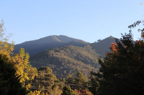 Immagine gratuita di alberi, giorno soleggiato, montagna, ora d'oro