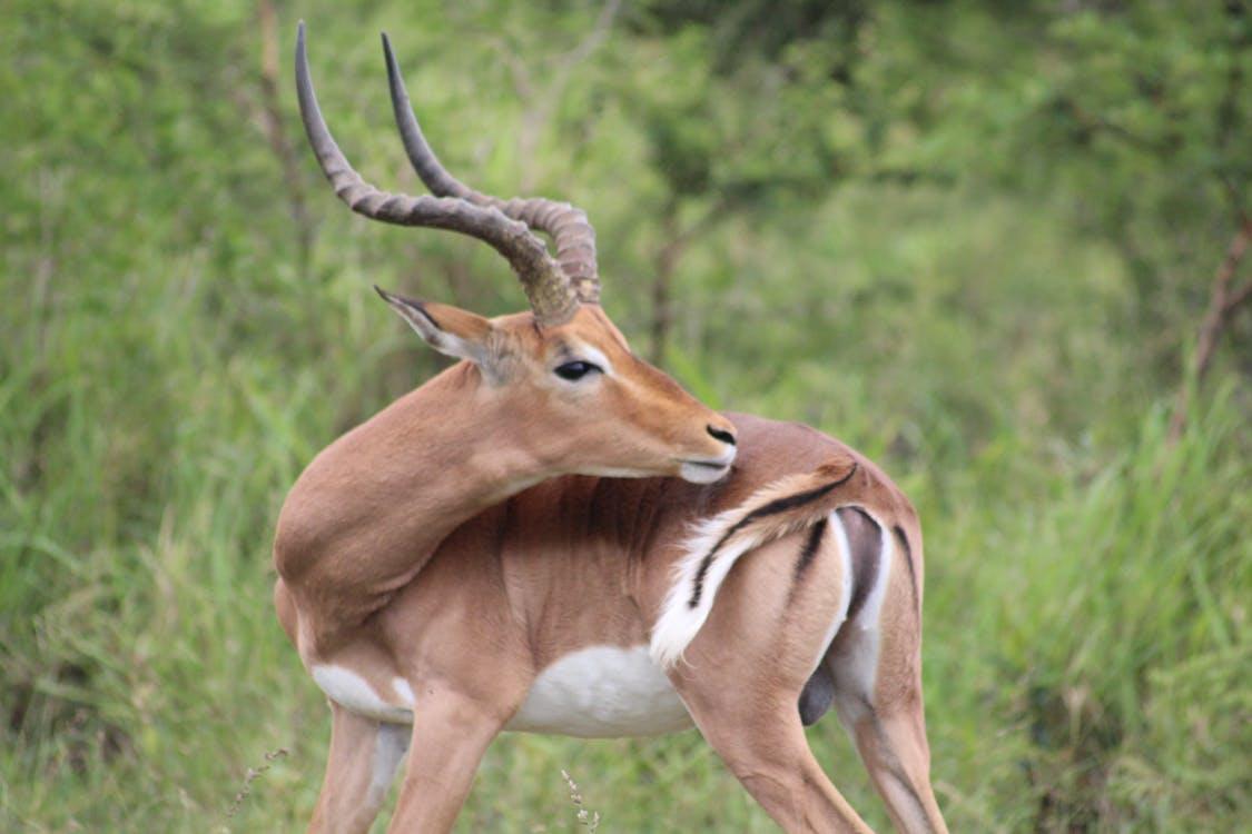 動物, 南非, 坦率