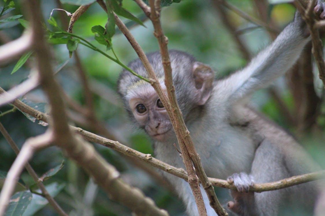 baby monkey, candid, cute