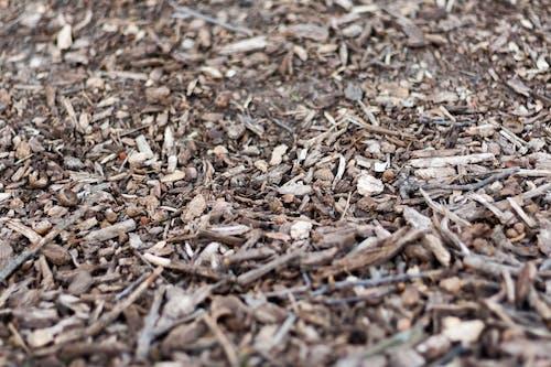 Fotobanka sbezplatnými fotkami na tému kôra stromu, les