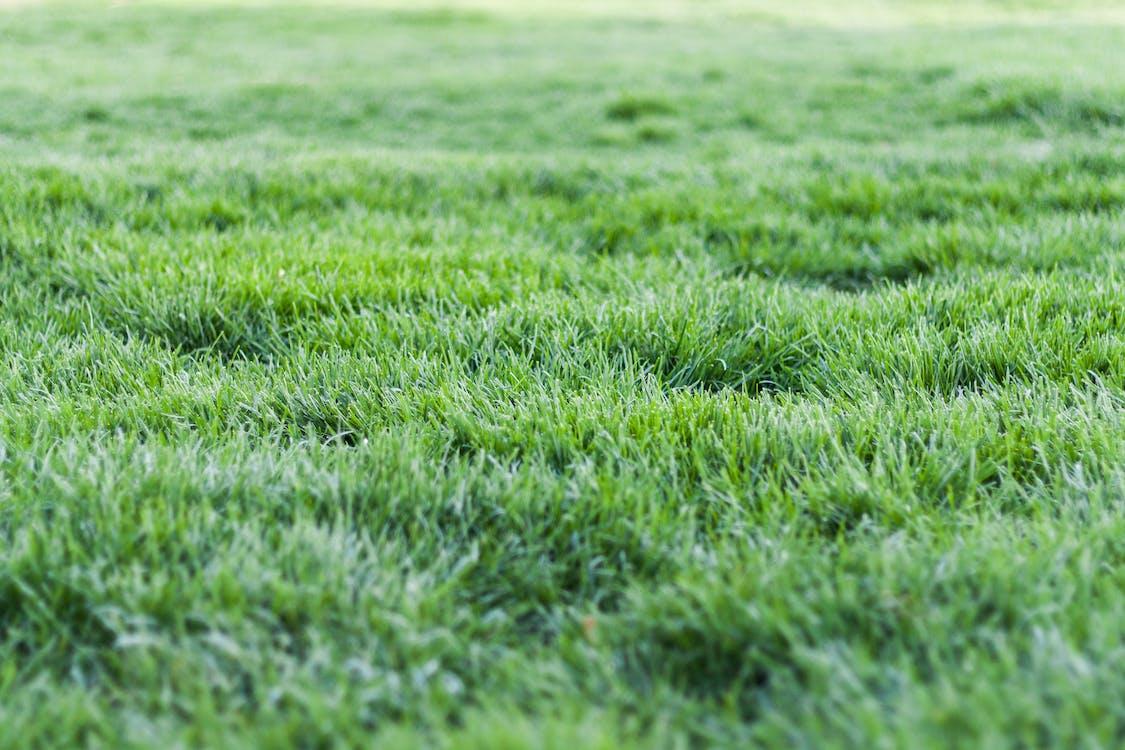 ทุ่งหญ้า, บด, พื้น