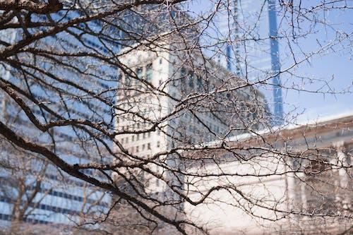 Fotobanka sbezplatnými fotkami na tému budovy, vetvy