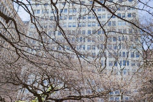 Fotobanka sbezplatnými fotkami na tému budova, vetvy