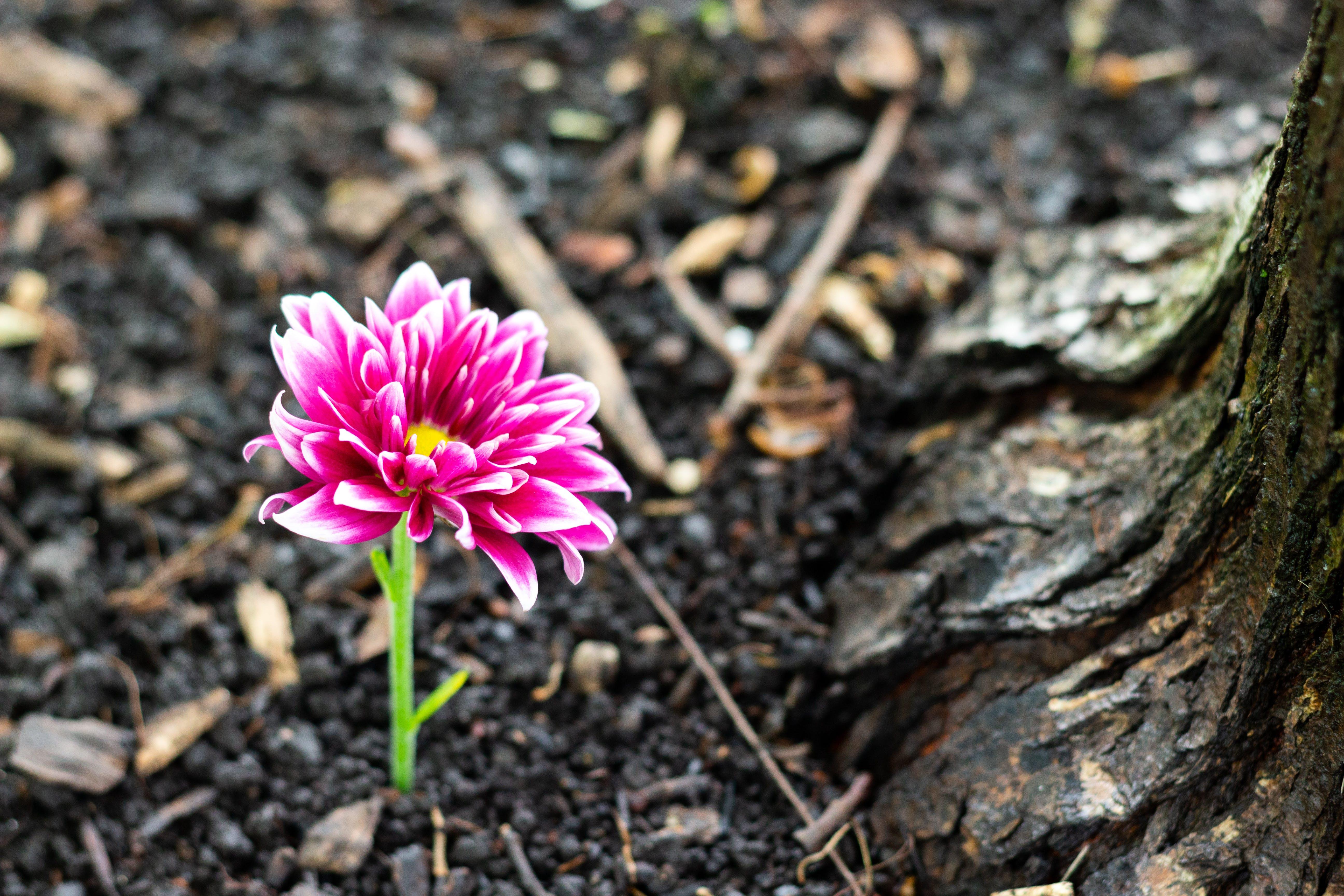 Free stock photo of flower, ground