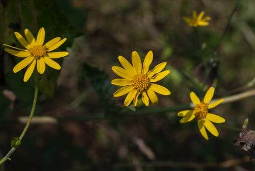Foto stok gratis bunga kuning, bunga-bunga, Desktop