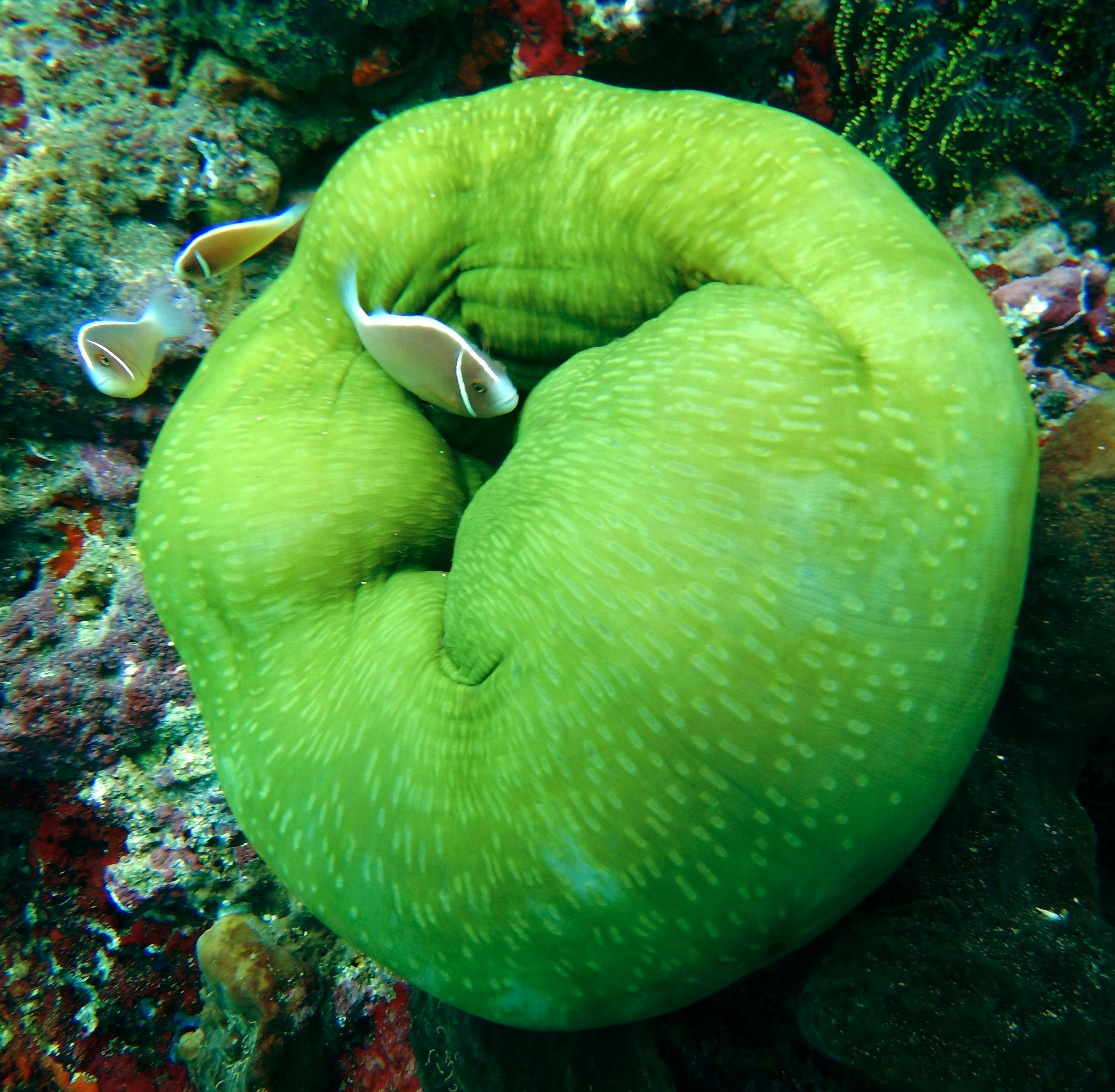 Brown Aquarium Fish