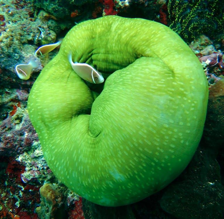 akvárium, bezstavovce, koraly
