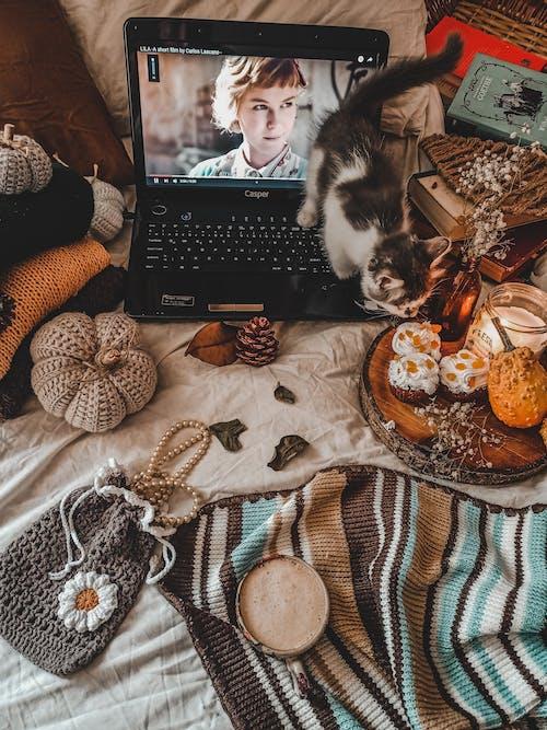 Kostenloses Stock Foto zu filmabend, orange, zuhause
