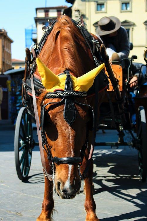 adam, araba, at, at arabası içeren Ücretsiz stok fotoğraf