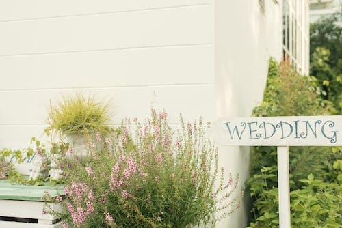 緑の植物と家の近くの結婚式の看板
