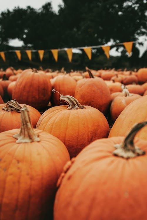 Immagine gratuita di agricoltura, arancia, arancione