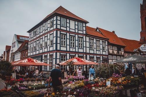 คลังภาพถ่ายฟรี ของ ขายปลีก, คละ, ดอกไม้, ตลาด