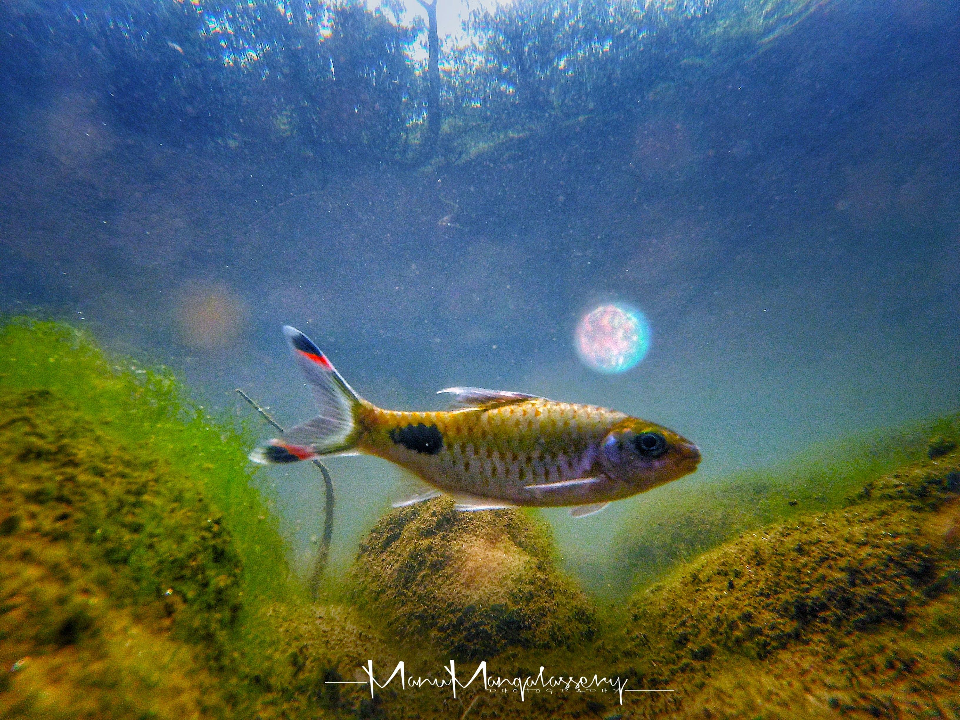 Free stock photo of fish, gopro, hdr, Mossy rocks