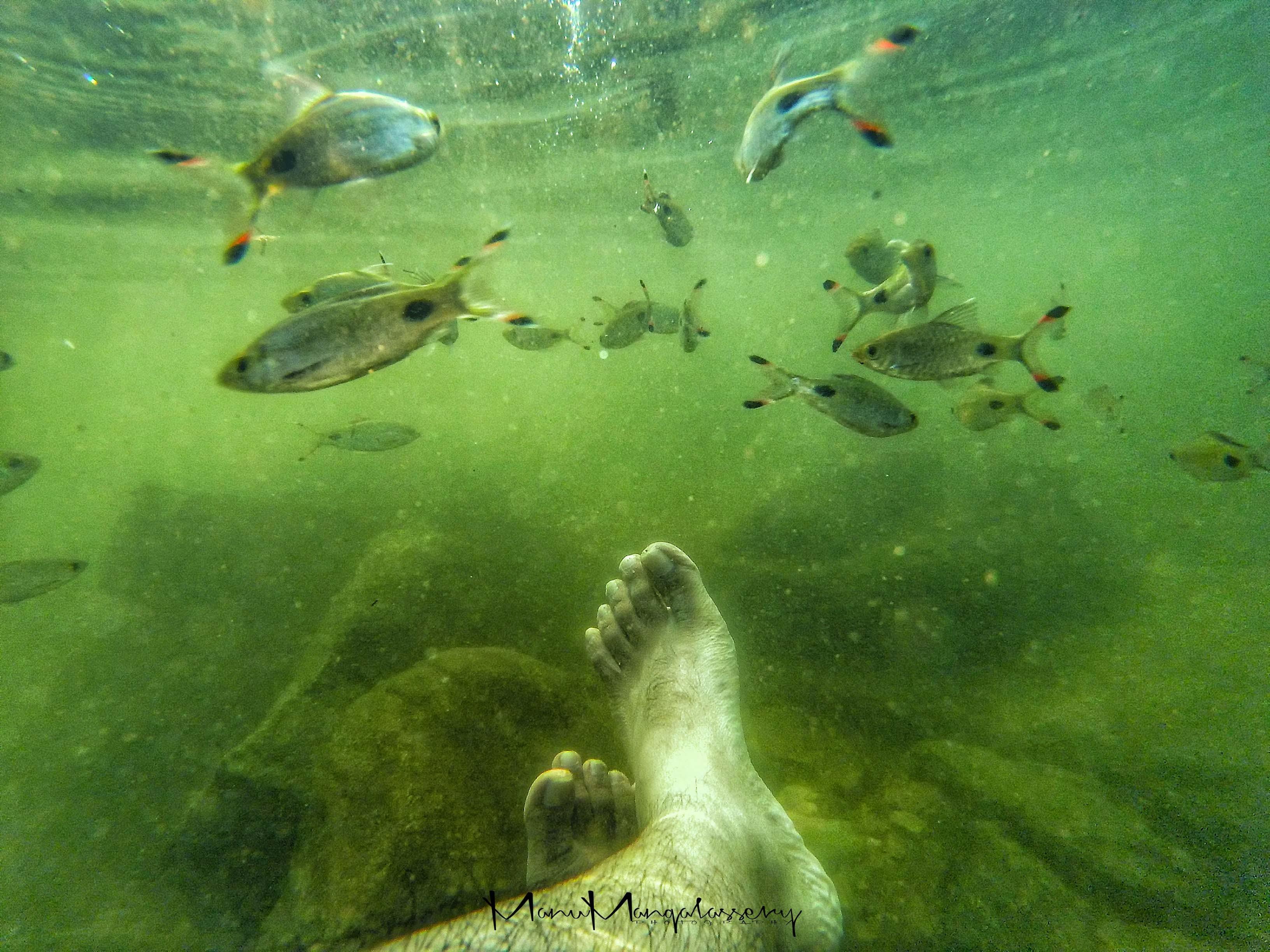 Free stock photo of fish, HD wallpaper, hd wallpapers, rock