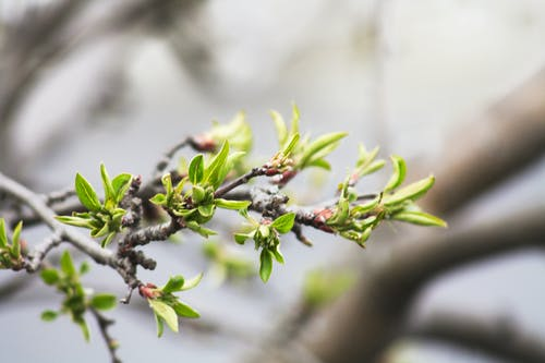 ağaç, alan derinliği, Bahçe, bitki örtüsü içeren Ücretsiz stok fotoğraf