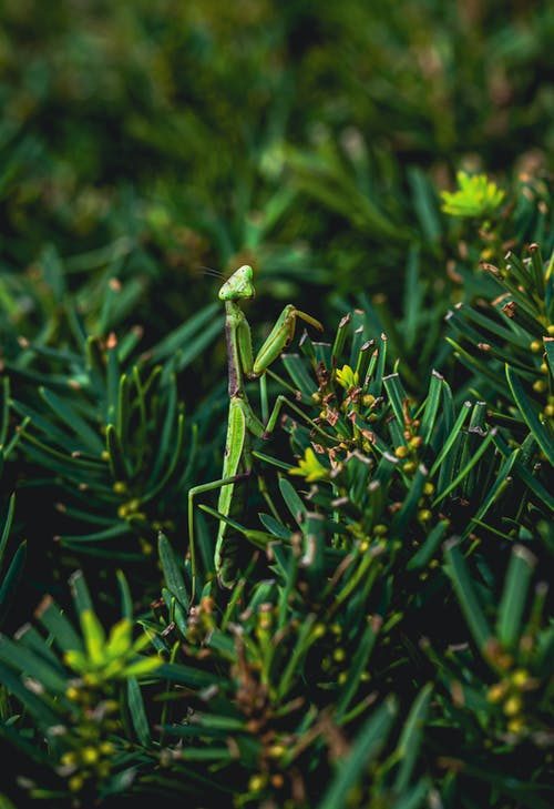 Photos gratuites de à feuilles persistantes, arbre, bois