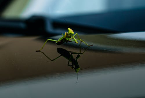Photos gratuites de animal, araignée, couleur