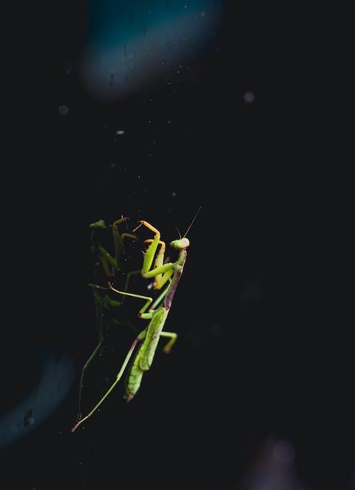 Photos gratuites de animal, antenne, araignée