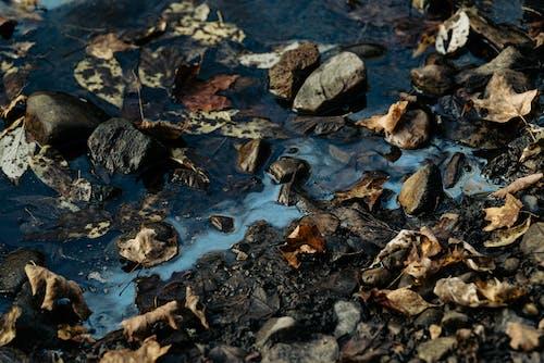 Photos gratuites de algue, automne, caillou