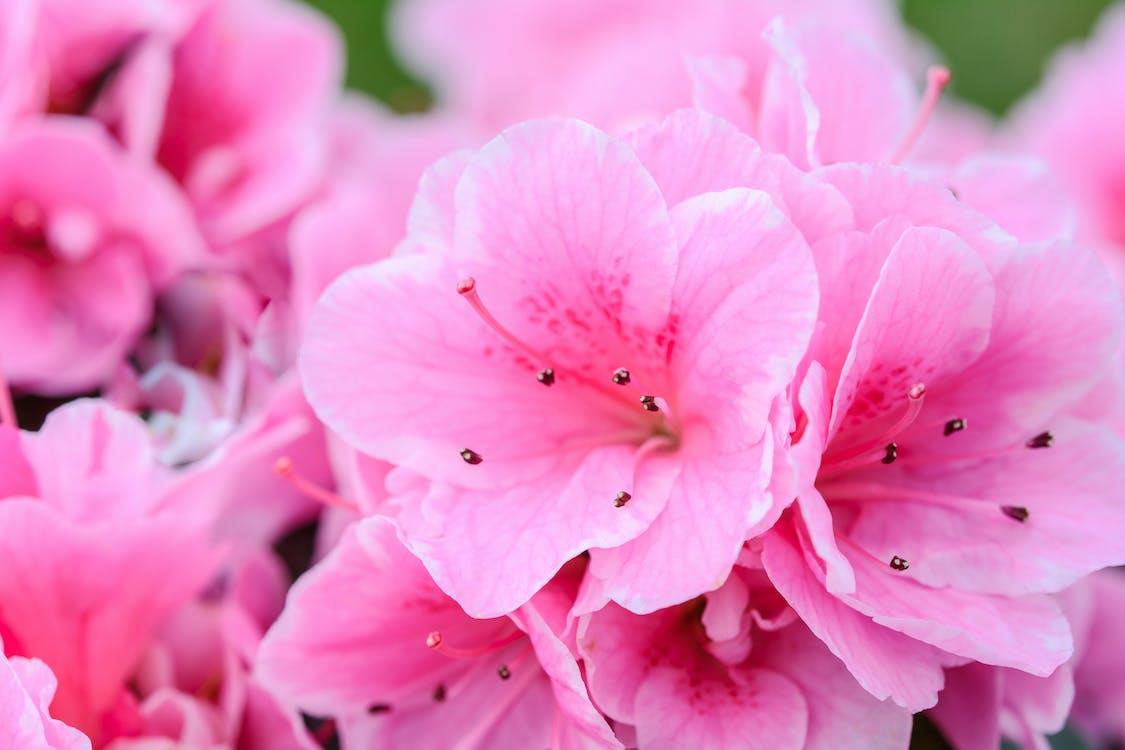 HD шпалери, великий план, весна