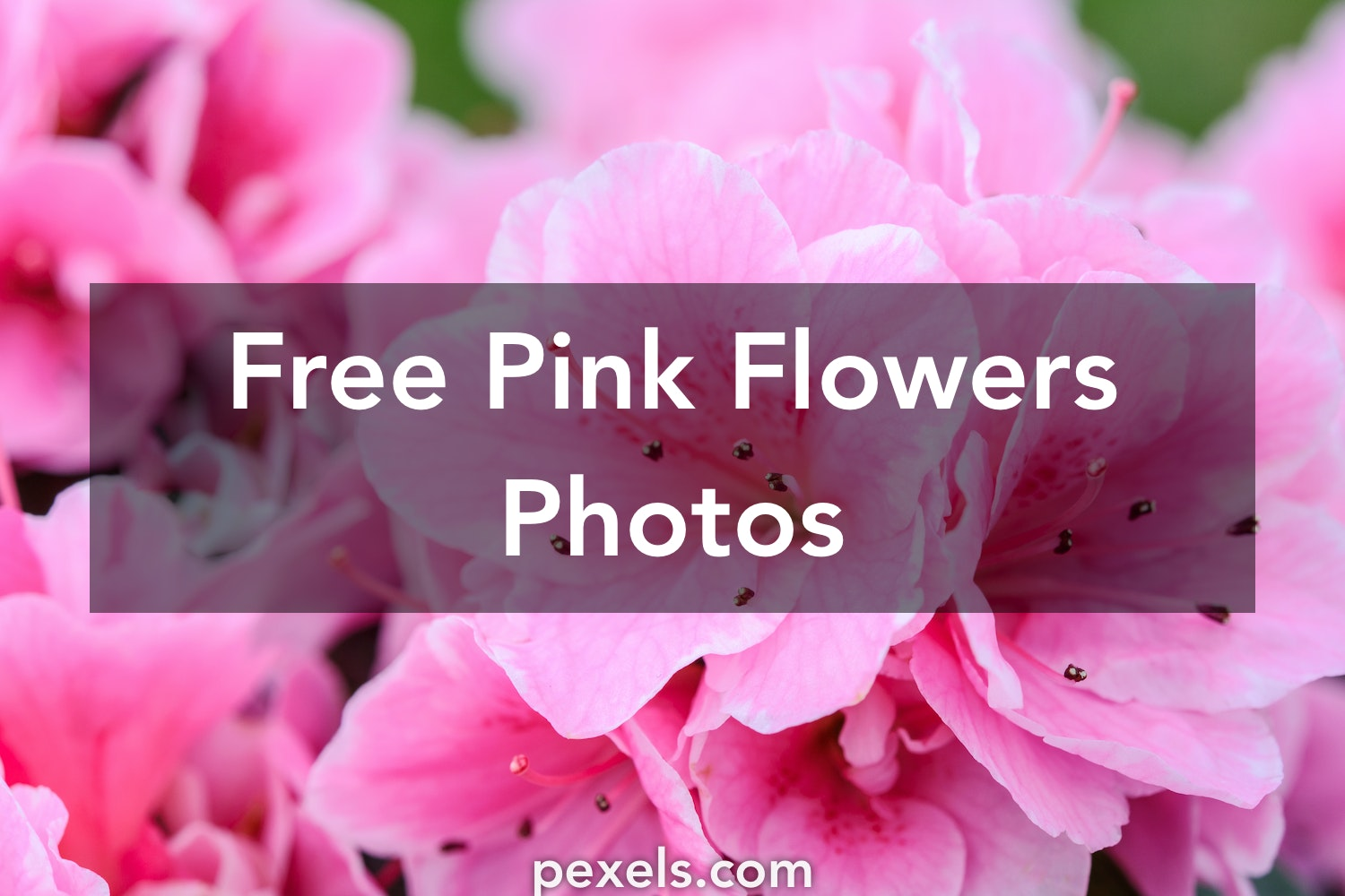 1000 Interesting Pink Flowers Photos Pexels Free Stock Photos
