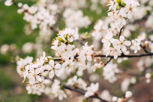 ağaç, Bahçe, beyaz, bitki örtüsü içeren Ücretsiz stok fotoğraf