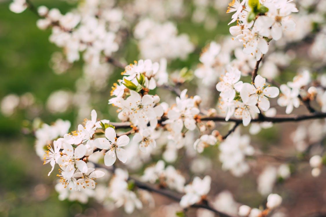 alb, anotimp, arbore