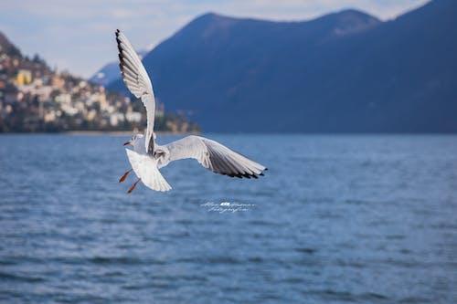 Foto profissional grátis de ave-do-paraíso