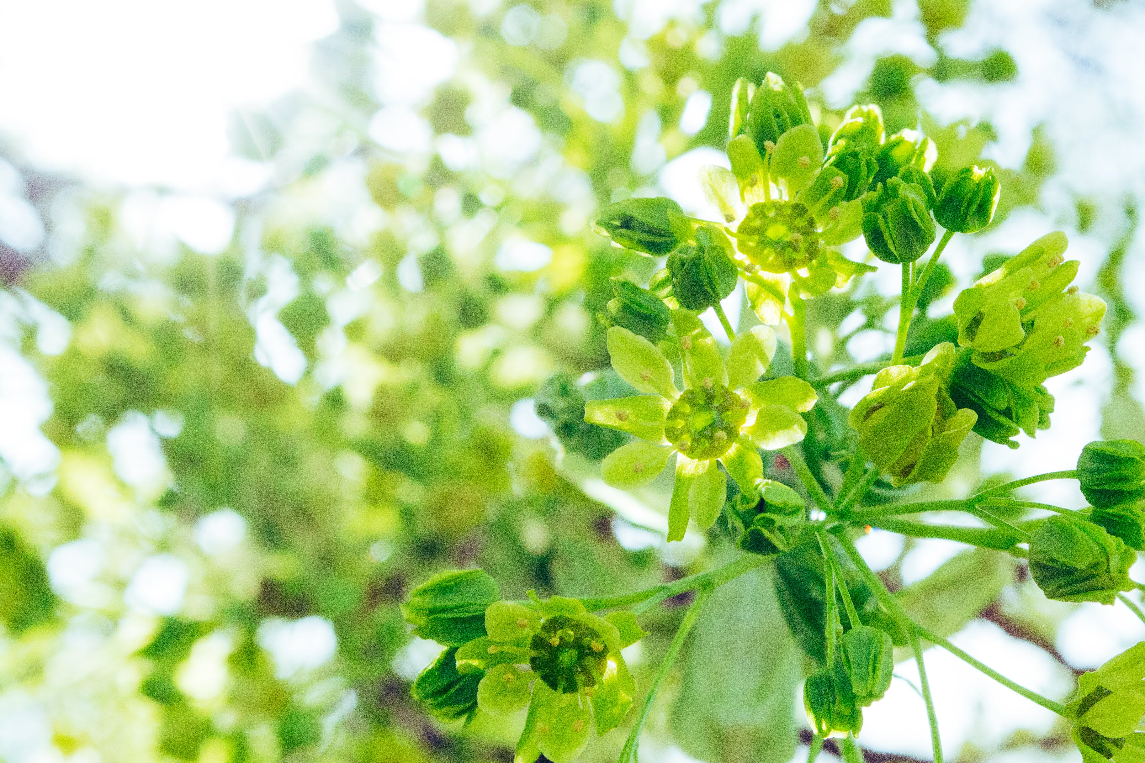 Tilt Shift Photography of Green Flowers