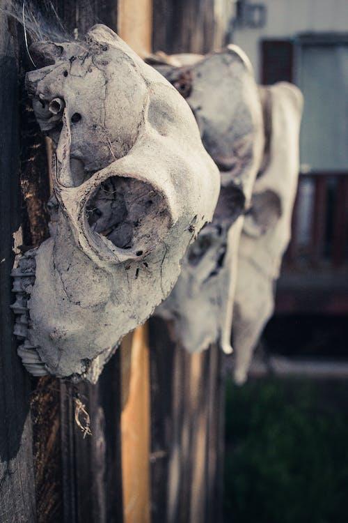 Foto profissional grátis de ancião, arte, assustador, cerca