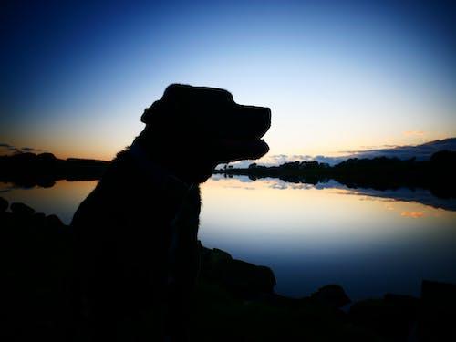 Foto d'estoc gratuïta de aigua, capvespre, cel, goldrn