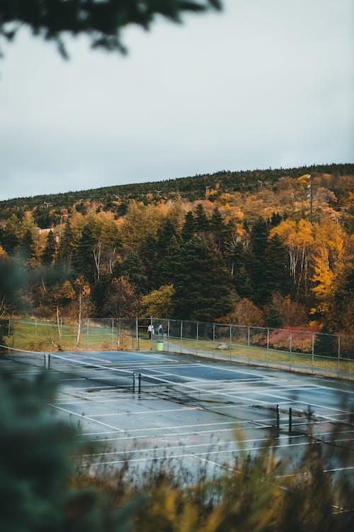 Безкоштовне стокове фото на тему «copy space, Вибірковий фокус, ліс»