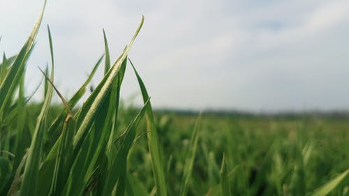 Shallow Focus Photography of Green Grass Field