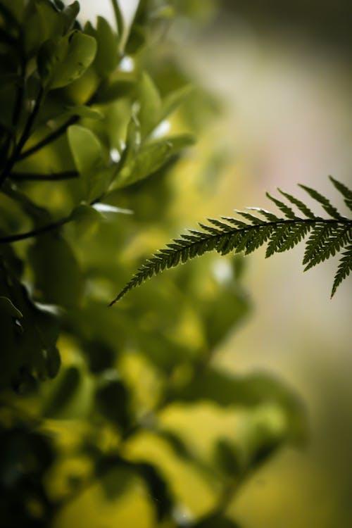 Ảnh lưu trữ miễn phí về arty, cây xanh, dương xỉ, lý lịch