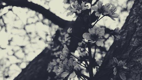 ağaç, ağaçlar, ahşap, bağbozumu içeren Ücretsiz stok fotoğraf