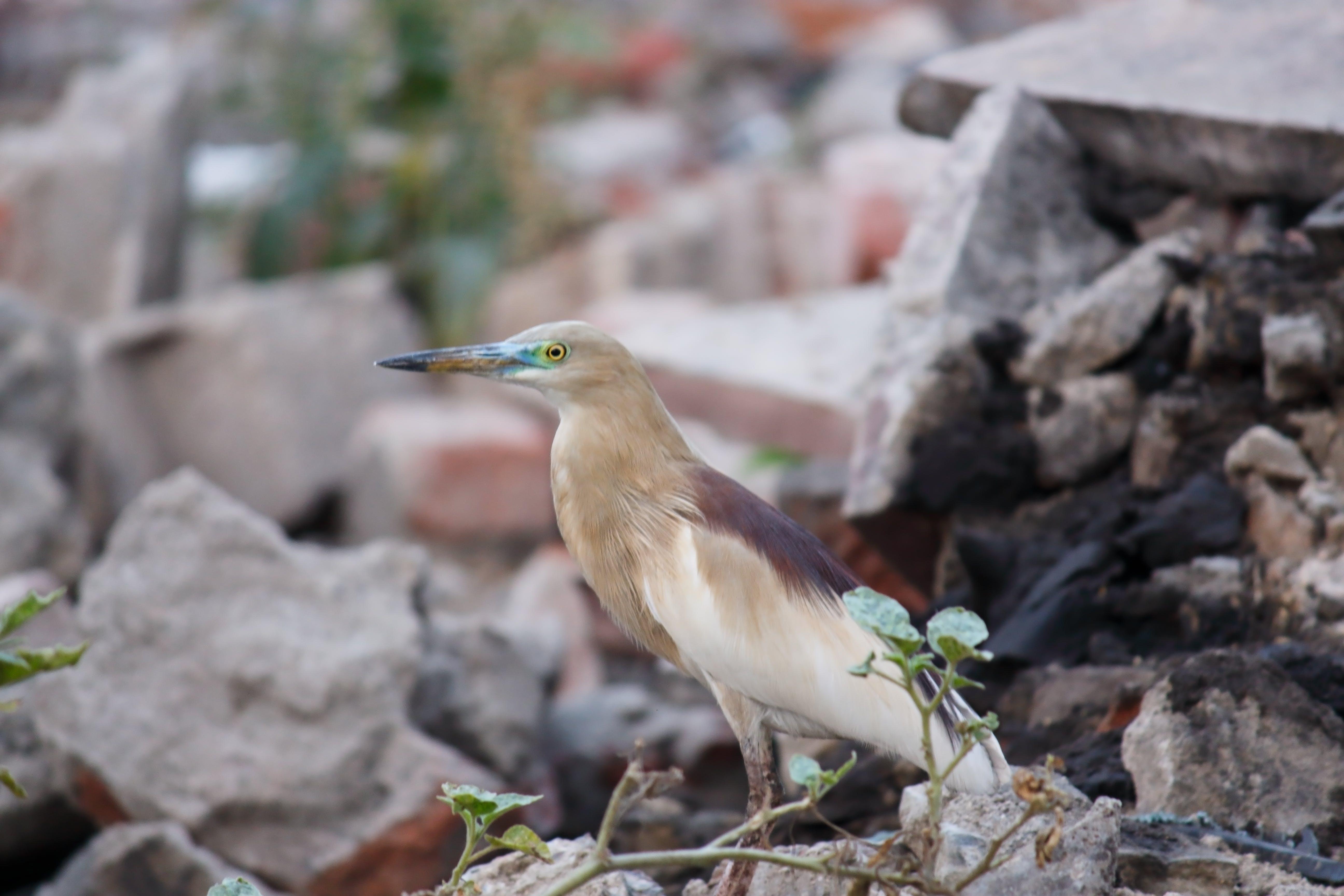 Free stock photo of #birdwatching #thetweetsuites #birdfreaks #nuts_