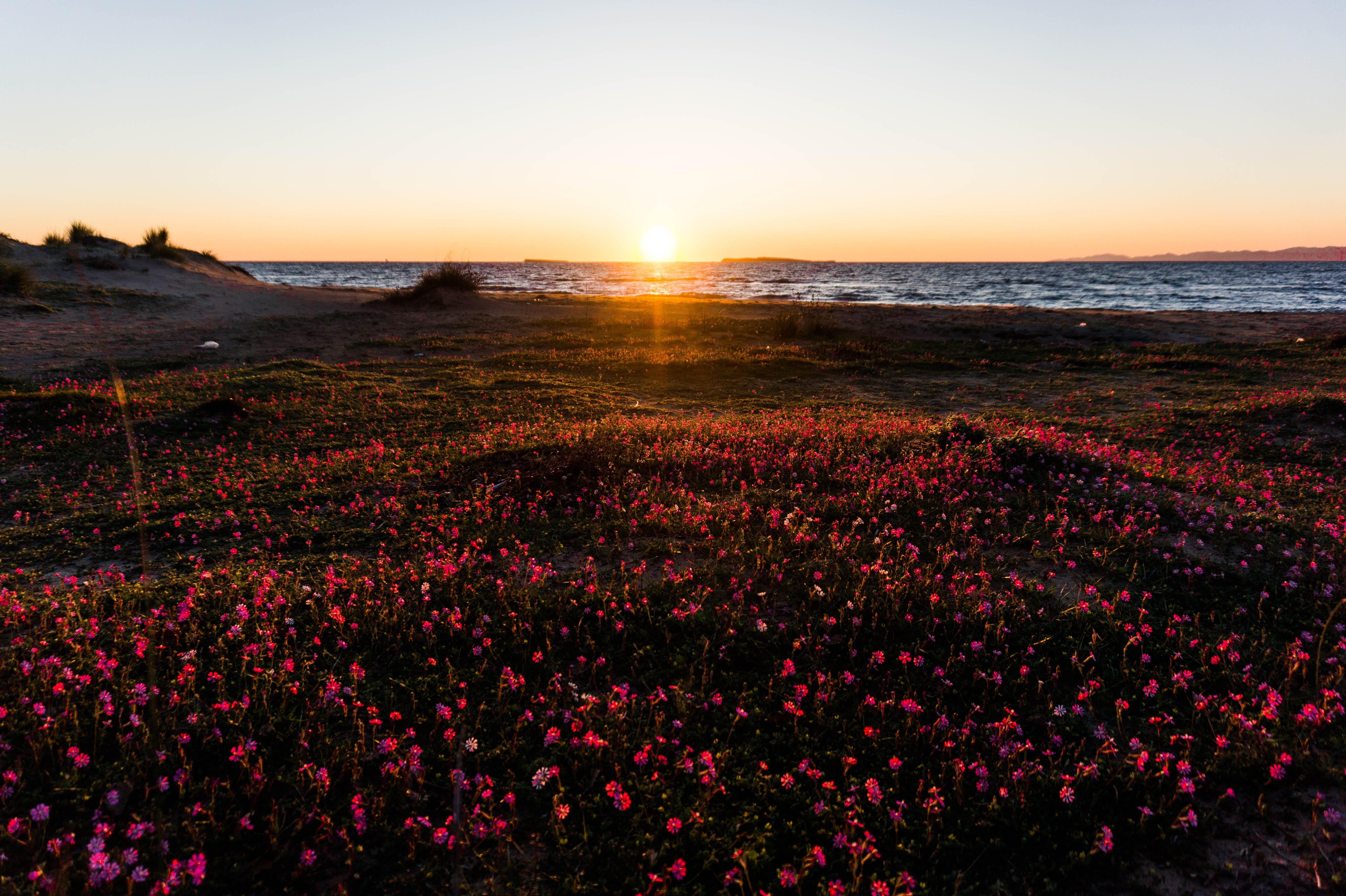 Photography of Flower Field Near Sea