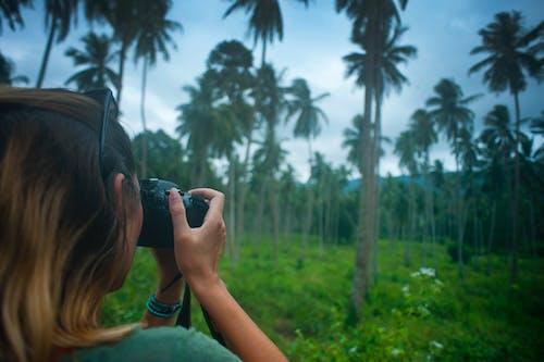Kostenloses Stock Foto zu aufnehmen von fotos, bäume, kamera, mädchen