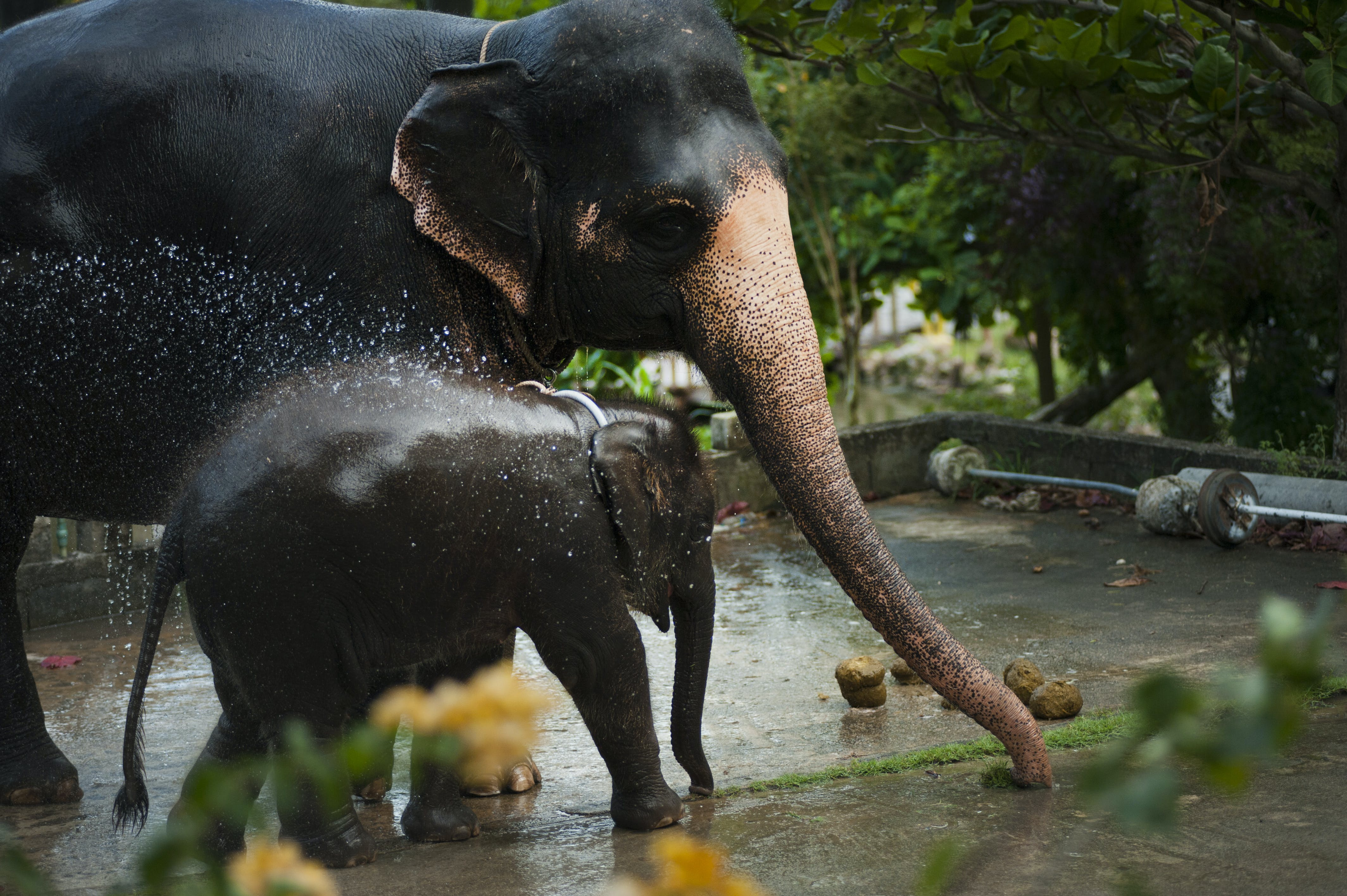 Photo of Black Elephant With Baby