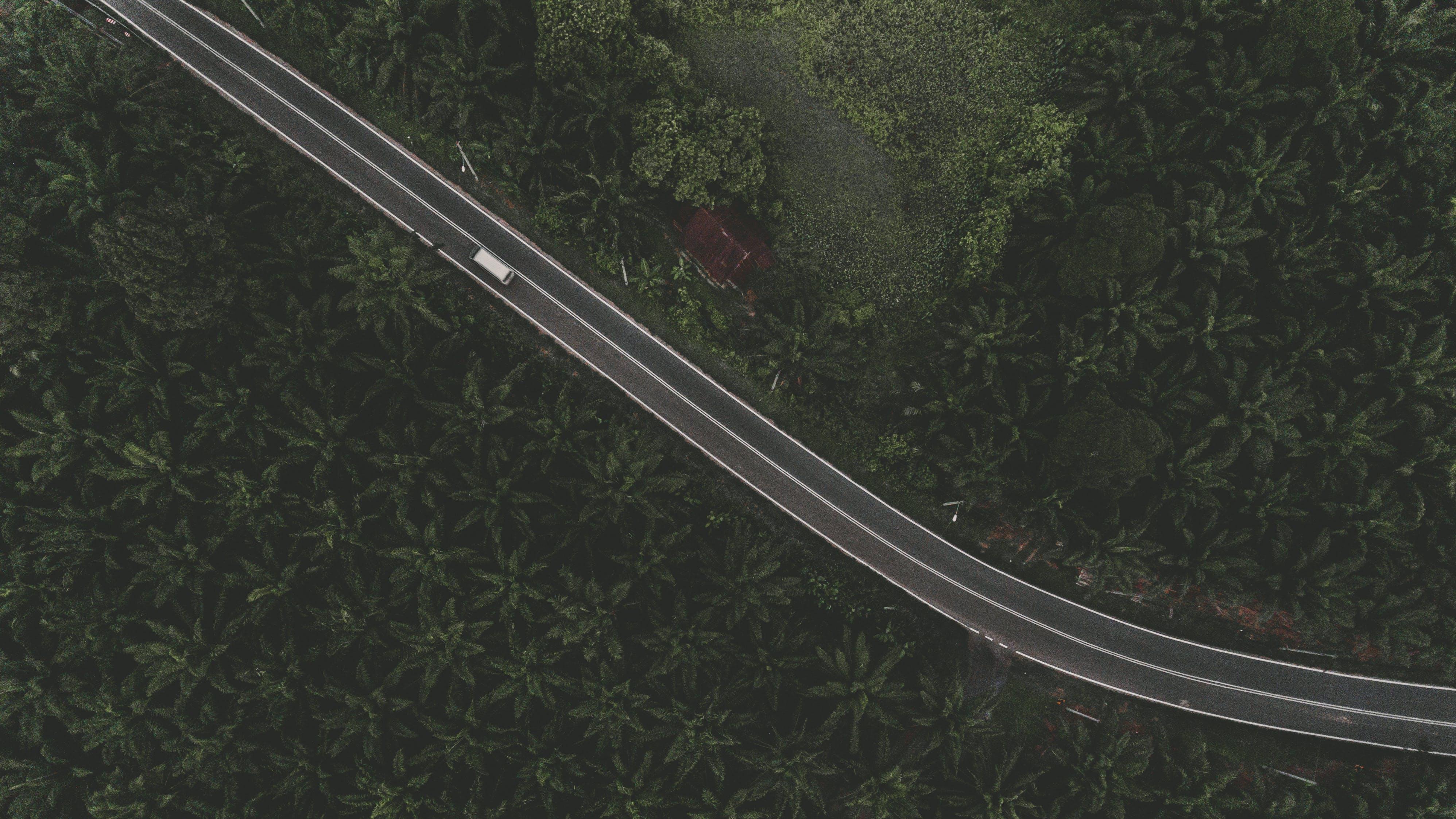 คลังภาพถ่ายฟรี ของ กลางแจ้ง, การจราจร, ต้นไม้, ถนน