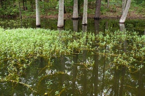 Бесплатное стоковое фото с lake murray, вода, деревья, заводы