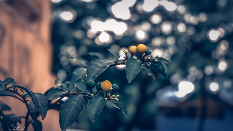 Macro Photo Of Plant