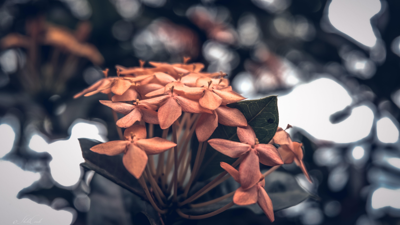 Free stock photo of bokeh, buds, flower, garden