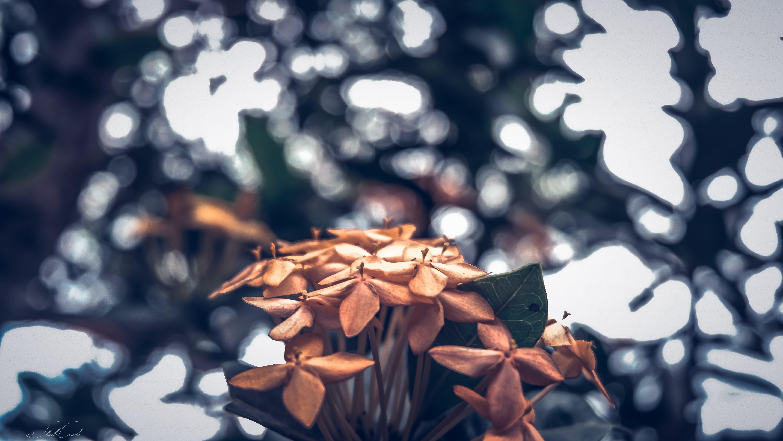 Free stock photo of garden, petals, plants, flower