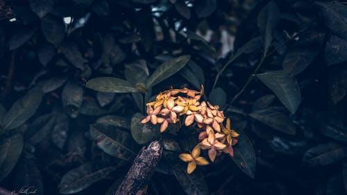 Immagine gratuita di boccioli, fiore, giallo arancio, giardino